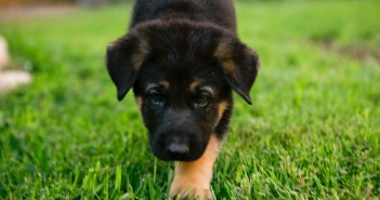 Puppy Care: 5 Questions to Ask You Vet