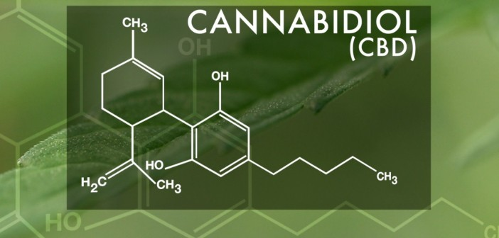 CBD Oil: Important Facts to Know Before Purchase