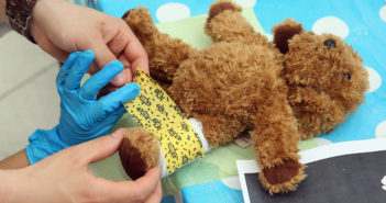 Charite Hospital Hosts Annual Teddy Bear Clinic