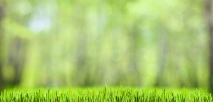 5 Lawn Supplies You Need to Purchase Before Spring Arrives