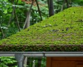 How to Clean your Gutters in Spring
